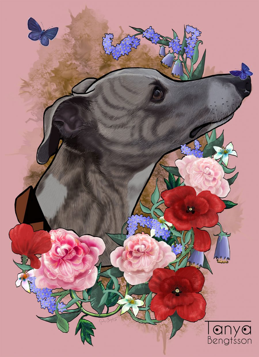 A colorful illustration/portrait of a whippet from the neck up. The dog is framed by flowers such as poppies, forget-me-nots and bluebell flowers. Two blue butterflies is flying around.